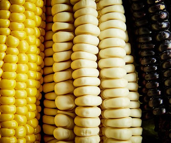 Pit — Corn!